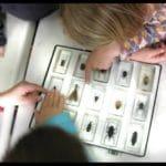 Descubriendo los insectos T. 2019